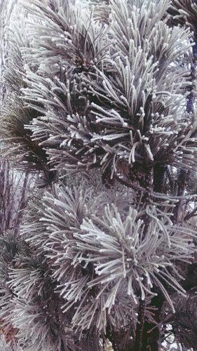 dekoracje pisane mrozem